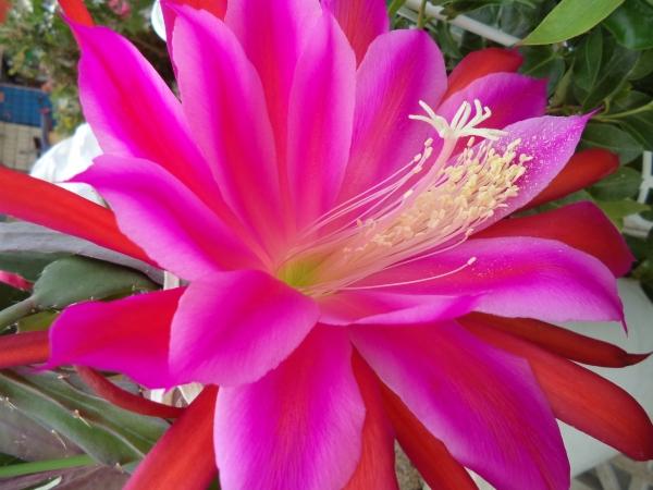 2013-06-08 Beautiful flower