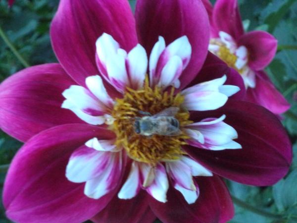 2013-08-28 Denver Botanic Gardens (11)