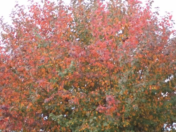 2013-10-08 Autumn Popcorn DSC03067