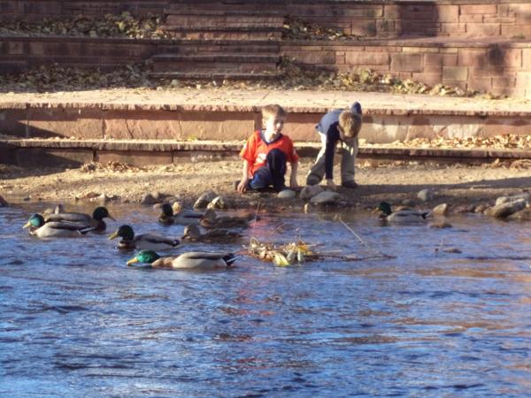 2013-11-10 Boulder Creek Ducks and River (31)
