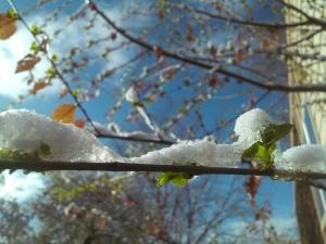 2015-04-03 Spring snow