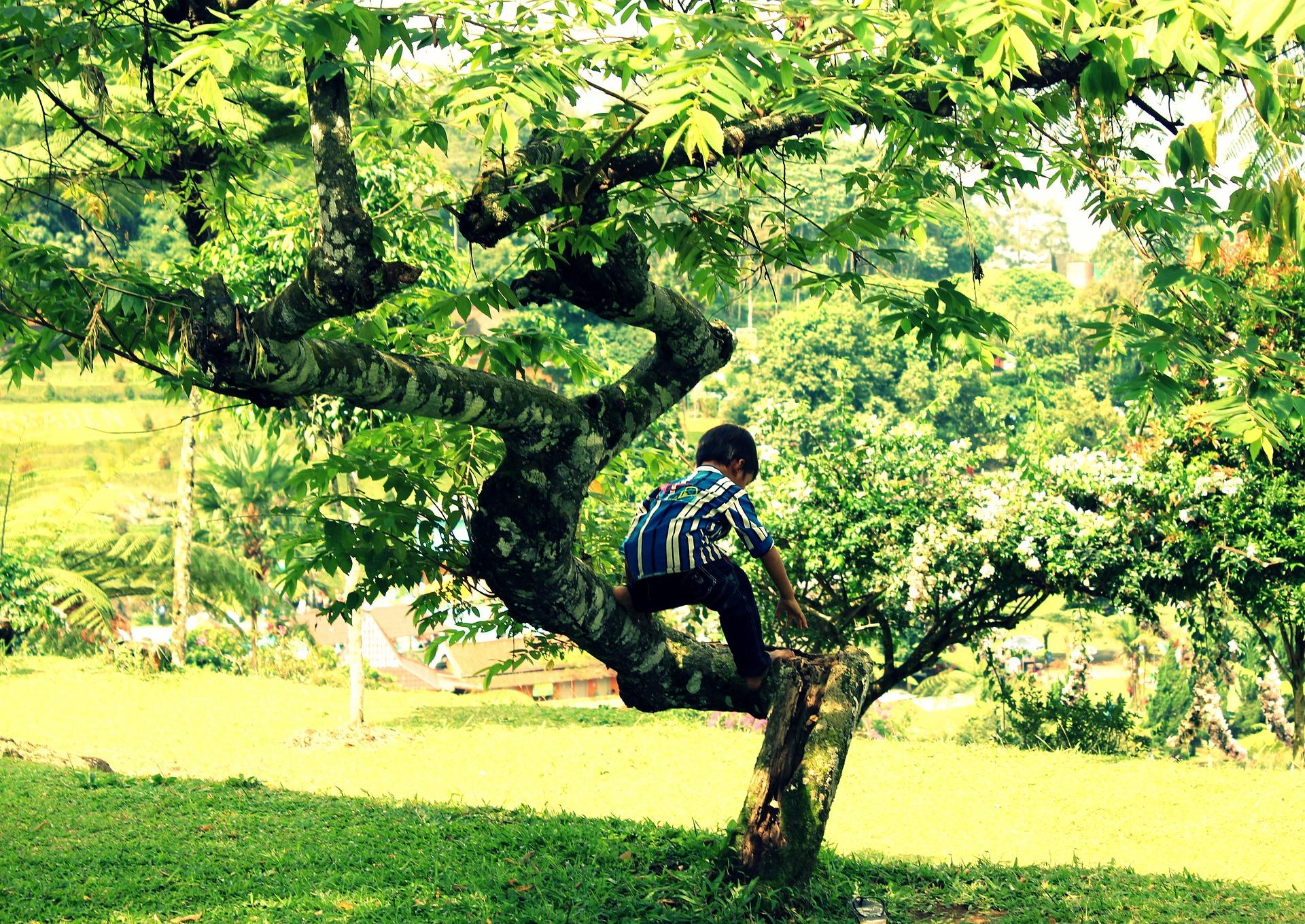 tree climbing kid-1737737_1920
